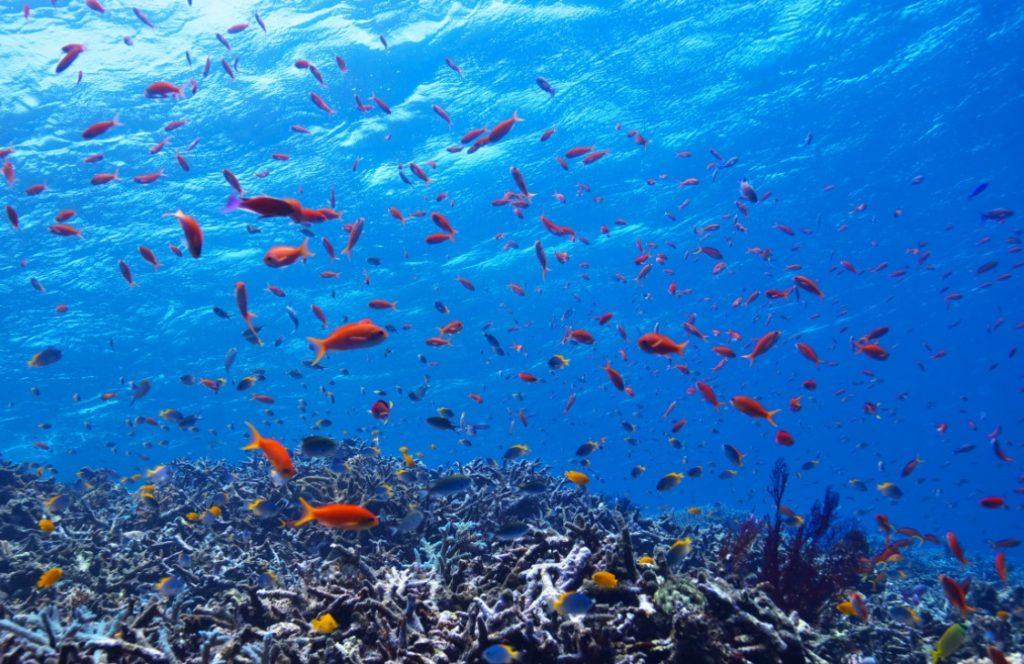 宮古島の魚たち