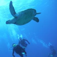宮古島でのダイビング